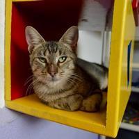 Adopt A Pet :: Maddie - Buena Vista, CO