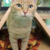 Adopt A Pet :: Ellie - Suwanee, GA