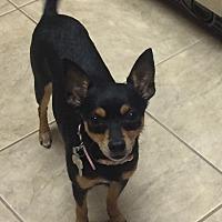 Adopt A Pet :: Lola - Westport, CT