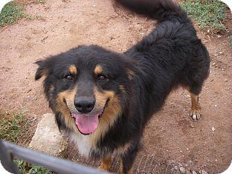 Australian Shepherd Mix Dog for adoption in Buchanan Dam, Texas - Bogie