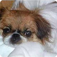 Adopt A Pet :: Kami - Mays Landing, NJ