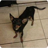 Adopt A Pet :: Galaxy - Slatington, PA