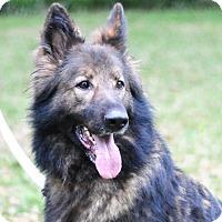 Adopt A Pet :: Bear Newman - Pike Road, AL