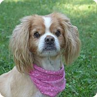 Adopt A Pet :: Maybelle - Mocksville, NC