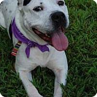 Adopt A Pet :: Nadia (courtesy listing) - Richmond, VA