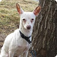 Adopt A Pet :: Kerby - Meridian, ID