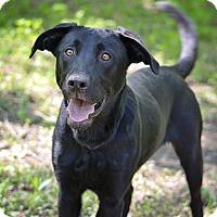 Adopt A Pet :: Geo - Lewisville, IN
