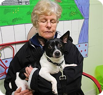 Jack Russell Terrier Mix Dog for adoption in Elyria, Ohio - Pudgie