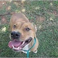 Adopt A Pet :: Libby - Blanchard, OK