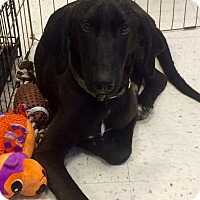Adopt A Pet :: Lucky Star in CT - East Hartford, CT