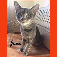 Adopt A Pet :: Jana - Iroquois, IL