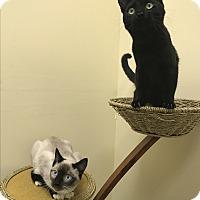 Adopt A Pet :: Remi and Rudy - Pasadena, CA