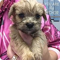 Adopt A Pet :: Gabi - Brea, CA
