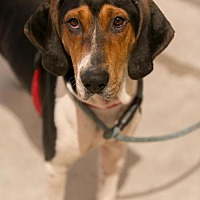 Adopt A Pet :: Oakley - Roanoke, VA