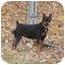 Photo 2 - Miniature Pinscher Dog for adoption in Columbus, Ohio - Matrix