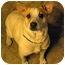 Photo 4 - Terrier (Unknown Type, Medium)/Beagle Mix Dog for adoption in Alabaster, Alabama - CORNCHIP