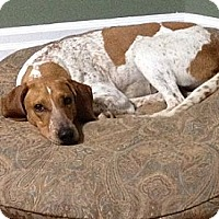 Adopt A Pet :: Biscuit - Hamilton, ON