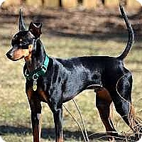 Adopt A Pet :: Pogo - Nashville, TN
