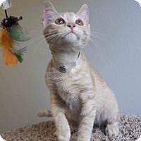 Adopt A Pet :: Samuel - Colorado Springs, CO