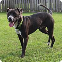 Adopt A Pet :: Mitch - Baton Rouge, LA