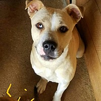 Adopt A Pet :: Lily - Lawrenceburg, TN