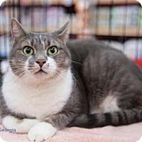 Adopt A Pet :: Georgia - Merrifield, VA