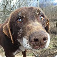 Adopt A Pet :: Brute - Jefferson, NH