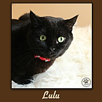 Adopt A Pet :: LuLu - Indianapolis, IN