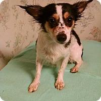 Adopt A Pet :: Molly - Gallatin, TN
