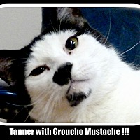 Adopt A Pet :: Tanner / Groucho - Greenville, OH