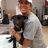 Adopt A Pet :: Brady - Bergen County, NJ