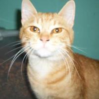 Adopt A Pet :: Bennet - Clinton, MO