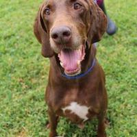 Adopt A Pet :: Doc - Bradenton, FL