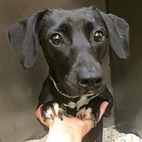 Adopt A Pet :: Miss Tyler - Oak Ridge, NJ