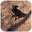 Photo 2 - Labrador Retriever/American Pit Bull Terrier Mix Dog for adoption in Concord, North Carolina - STAR