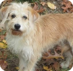 Terrier (Unknown Type, Small) Mix Dog for adoption in Bloomfield, Connecticut - Pumpkin