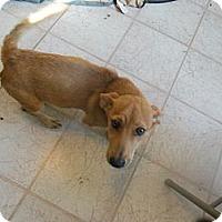 Adopt A Pet :: Jewel - Cincinnati, OH