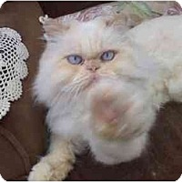 Adopt A Pet :: DaVinci Sponsorship Needed - Beverly Hills, CA