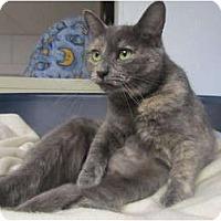 Adopt A Pet :: Bella - Pascoag, RI