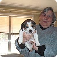 Adopt A Pet :: Spike - Russellville, AR