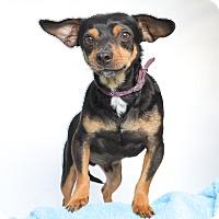 Adopt A Pet :: Nutella - Los Angeles, CA