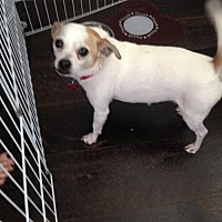 Adopt A Pet :: ZZ-Dino  **courtesy post - Rancho Santa Margarita, CA