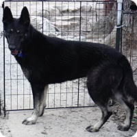 Adopt A Pet :: PADME - SAN ANTONIO, TX