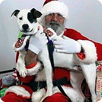 Adopt A Pet :: Robbie - Ahoskie, NC