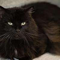 Adopt A Pet :: Tinker - Palm Springs, CA