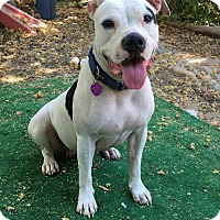 Adopt A Pet :: Nikki - Lincoln, CA