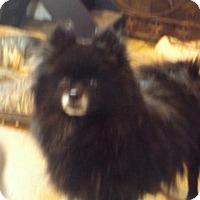Adopt A Pet :: Raven - Zaleski, OH