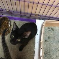 Adopt A Pet :: Foley - Miami, FL