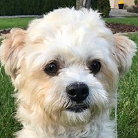 Adopt A Pet :: Ace Gangi-Belle - Cuba, NY