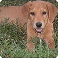Adopt A Pet :: Carmen - Adamsville, TN